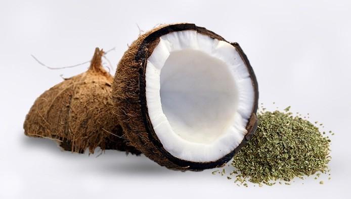 coco-oregano