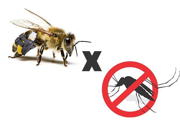 Propolis-contra-dengue