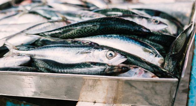 anchovas-o-peixe-saudavel-rico-em-omega-3-2